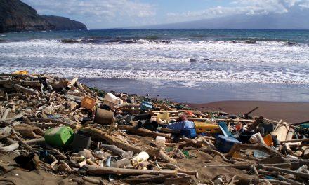 220 pounds of ocean trash inside dead sperm whale