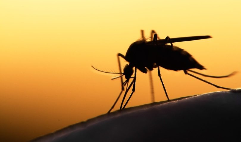 China implements enhanced yellow fever inspections