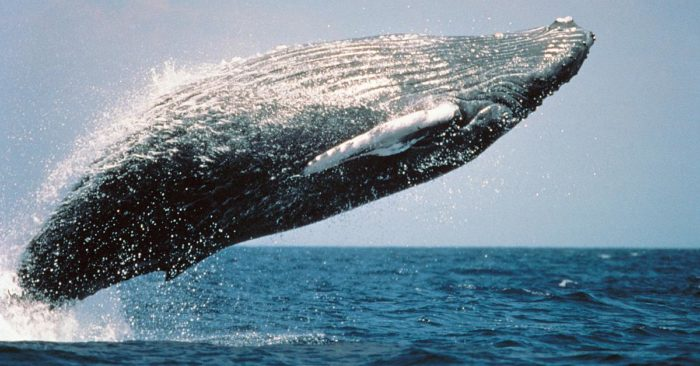 Equinor Wind joins project in protection of whales