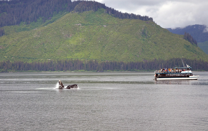 New pier to be built at Icy Strait Point, Alaska