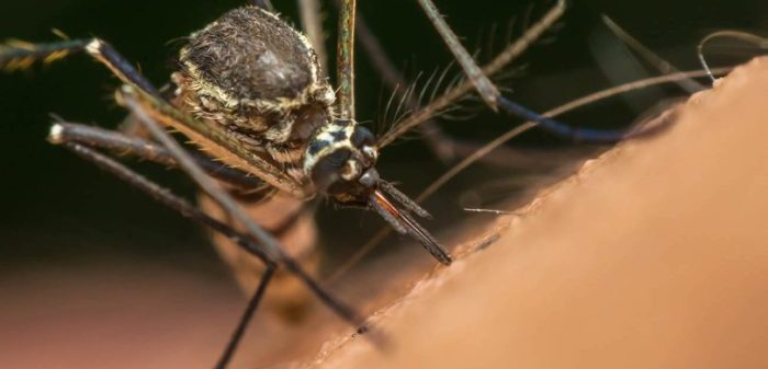 Steps to be taken to prevent malaria