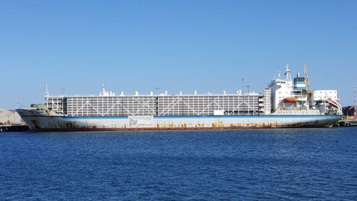 Australia reveals heat stress for sheep onboard livestock carrier
