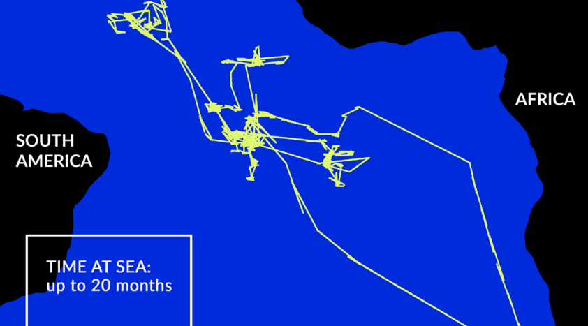 Oceana uses tech to identify illegal fishing and human rights abuses at sea