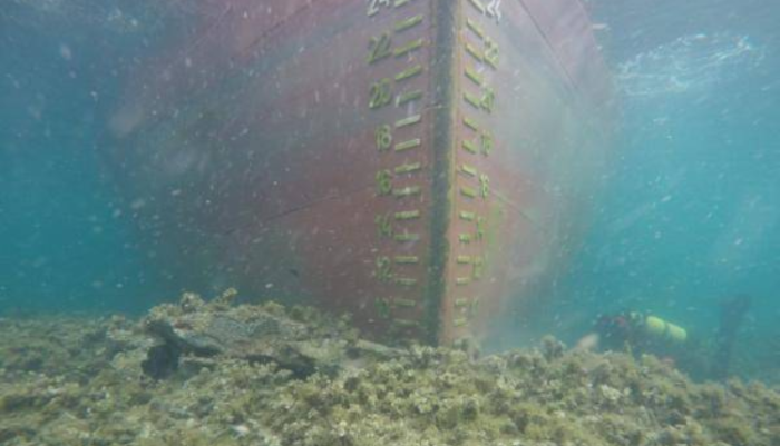 Cargo ship runs aground in French nature reserve